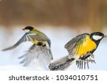 two bright birds fly from each... | Shutterstock . vector #1034010751
