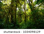 views of tropical forest... | Shutterstock . vector #1034098129
