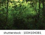 Small photo of June Meadow Grass, Green Fresh New Ferns, Bushes, Alnus Alder Trees, Wildlife Plants, Horizontal Rural Landscape Summer Season Vegetation Scenery Lush Foliage Tree Shadows Sunny Field Scene Background