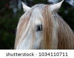 white horse eye and mane... | Shutterstock . vector #1034110711