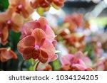 red orchid in the garden | Shutterstock . vector #1034124205