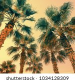 vintage palm trees against... | Shutterstock . vector #1034128309