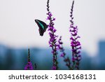 Stock photo a beautiful butterfly on a flower 1034168131