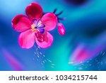 butterfly on a beautiful pink... | Shutterstock . vector #1034215744