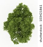 3d ash tree isolated over white | Shutterstock . vector #103421861