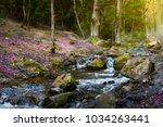 blooming spring forest ... | Shutterstock . vector #1034263441