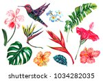 tropical flowers  jungle leaves ... | Shutterstock .eps vector #1034282035