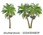 acai palm tree  euterpe...   Shutterstock .eps vector #1034304859