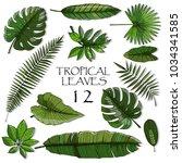 set of green tropical leaf | Shutterstock .eps vector #1034341585