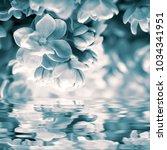 beautiful lilac flower blossom  ...   Shutterstock . vector #1034341951