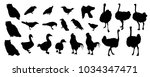 vector set of birds silhouettes | Shutterstock .eps vector #1034347471