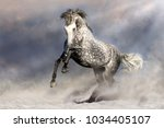 beautiful grey horse with long... | Shutterstock . vector #1034405107