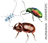 exotic beetles wild insect in a ... | Shutterstock . vector #1034405191