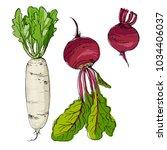 Daikon Radish  Beet Drawn By A...