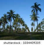 palm trees over blue sky... | Shutterstock . vector #1034409205