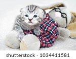 Stock photo cute kitten with a toy plush tabby kitten the kitten plays 1034411581