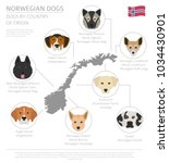 dogs by country of origin.... | Shutterstock .eps vector #1034430901