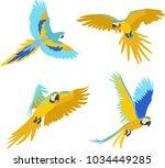 parrot illustration vector | Shutterstock .eps vector #1034449285
