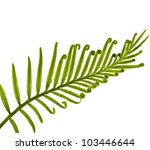 green young tendril leaf of... | Shutterstock . vector #103446644