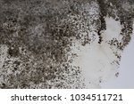 black fungus on the dirty walls ...   Shutterstock . vector #1034511721