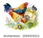 Chicken And Rooster In The...