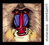 portrait of a mandrill primate  ... | Shutterstock .eps vector #1034526577