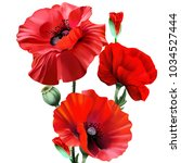 Bouquet Of Red Poppies  On A...