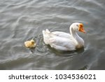 close up and some focus the... | Shutterstock . vector #1034536021