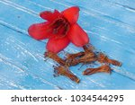 red cotton tree flowers on... | Shutterstock . vector #1034544295