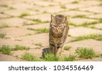 cat walking on the street... | Shutterstock . vector #1034556469