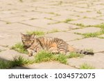 striped cat on the street.  | Shutterstock . vector #1034572075