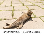 striped cat on the street.  | Shutterstock . vector #1034572081