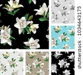 white flowers of lily  madonna... | Shutterstock .eps vector #1034643175