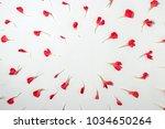 Red Petals Of Carnation Flower. ...