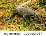 varanus lizard in the... | Shutterstock . vector #1034664157