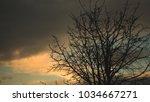 tree branch on dark cloud sky...   Shutterstock . vector #1034667271