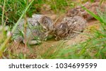 Stock photo two cute hare bunny siblings 1034699599