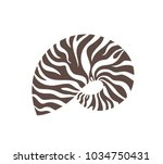 nautilus shell. isolated... | Shutterstock .eps vector #1034750431