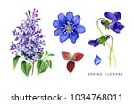 spring set of violet flowers.... | Shutterstock . vector #1034768011