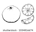 black and white fruit sketch... | Shutterstock .eps vector #1034816674