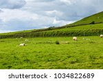 landscape of farm with group of ... | Shutterstock . vector #1034822689