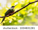 Small photo of RUFOUS TAILED JACAMAR