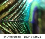Macro Of Peacock Feather