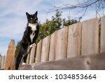 Black Cat On Fence In Backyard