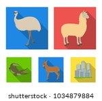 lama  ostrich emu  young... | Shutterstock .eps vector #1034879884