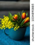 Small photo of Beautiful spring flowers (tulips and acacia dealbata mimosa) in blue cup on blue tablecloth
