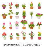 flowers and plants in pots... | Shutterstock .eps vector #1034907817