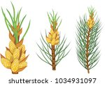 pine branches with yellow male... | Shutterstock .eps vector #1034931097