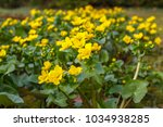 spring background with yellow ... | Shutterstock . vector #1034938285