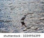 a beautiful graceful white...   Shutterstock . vector #1034956399